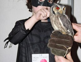 Boy dressed as batman holding an owl